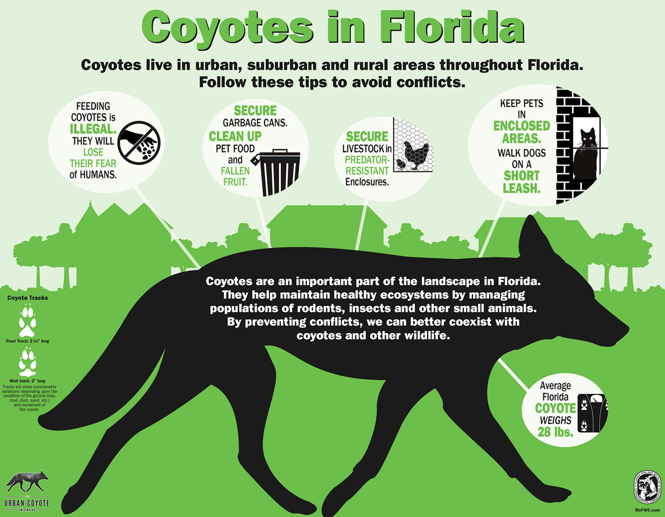 Infographic regarding coyotes in Florida linking to FL Fish and Wildlife  Conservation Commission
